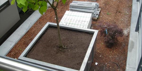 Dachbegrünung mit einem Baum